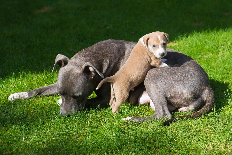 Soylent – Listenhunde-Nothilfe