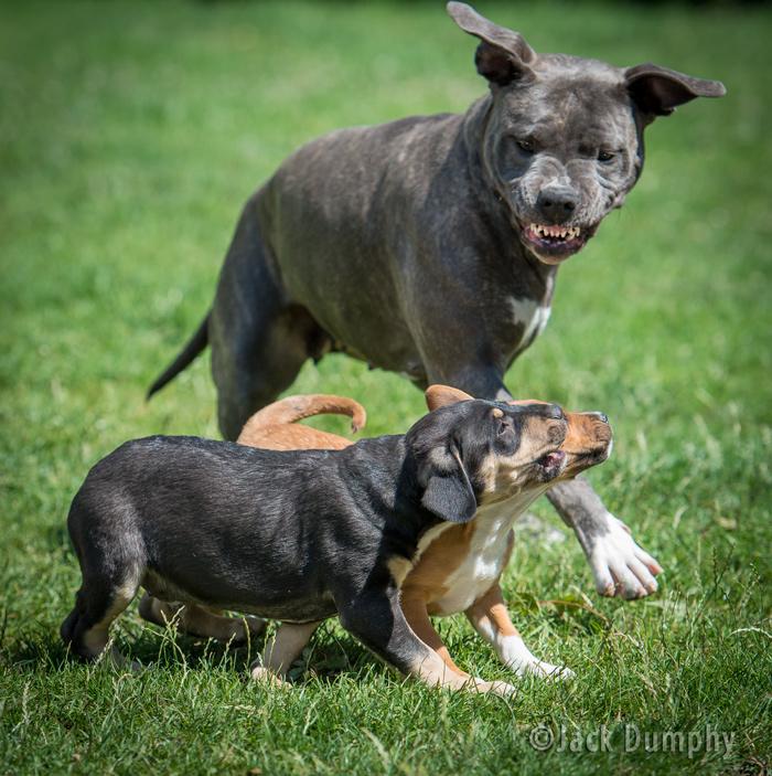 Tiny – Listenhunde-Nothilfe