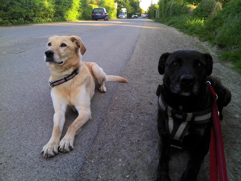 Don II – Listenhunde-Nothilfe