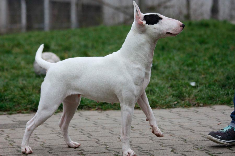 Gretchen – Listenhunde-Nothilfe