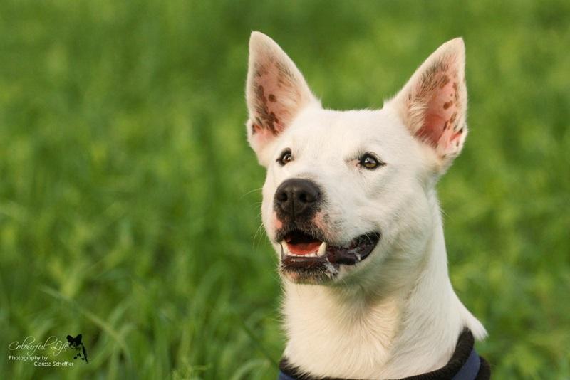 Timmy – Listenhunde-Nothilfe