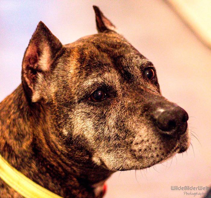 Nala – Listenhunde-Nothilfe