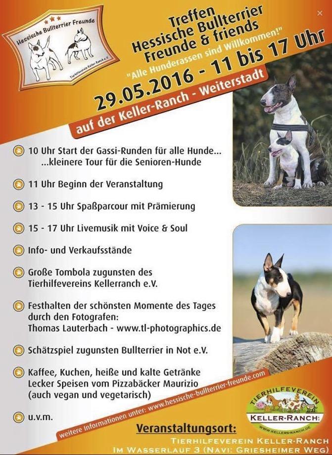 Hessisches_Bullterrier_Treffen_2