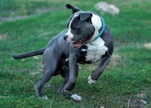 Vermittlung Listenhunde Nothilfe